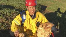 San Francisco firefighters rescue 2 dogs from cliff