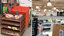 Coles customer 'shocked' to find birds eating bread in store