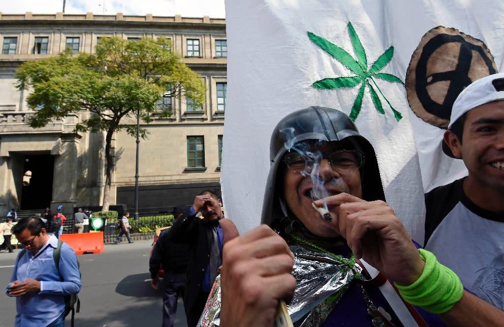 Мехико марихуана курят в голландии марихуану