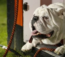 Stocks may be tanking but don't leave them in the doghouse