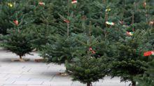 Interessante Fakten über Weihnachtsbäume