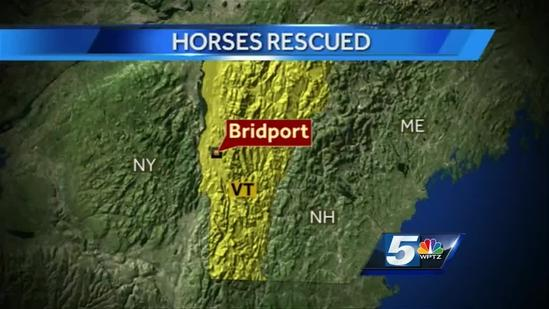 Family of horses rescued