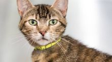 NC shelter pauses cat adoptions amid ringworm outbreak. How to protect your pet.