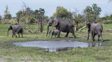 Mystery of why hundreds of elephants dropped dead