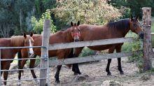 Chevaux mutilés : un poney retrouvé mort en Seine-Maritime