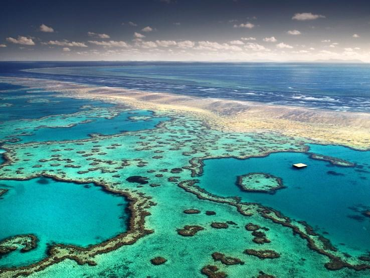 How Polygamy Could Save the Great Barrier Reef