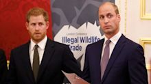 Harry and William are paranoid about meeting people, says royal expert