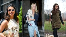Celebrities and their dogs: Why our pet pooches mean so much to us