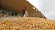 India allows 100,000 tonnes corn imports at lower duty as prices jump