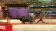 Buffalo-racer dubbed India's Bolt says no to national trials