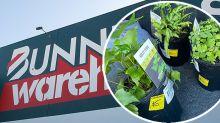 Bunnings shopper's 'brilliant' tip for finding bargain plants