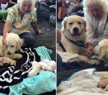 Service Dog Gives Birth to 8 Puppies at Florida Airport Gate