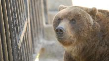 Why the next bear market may be more painful