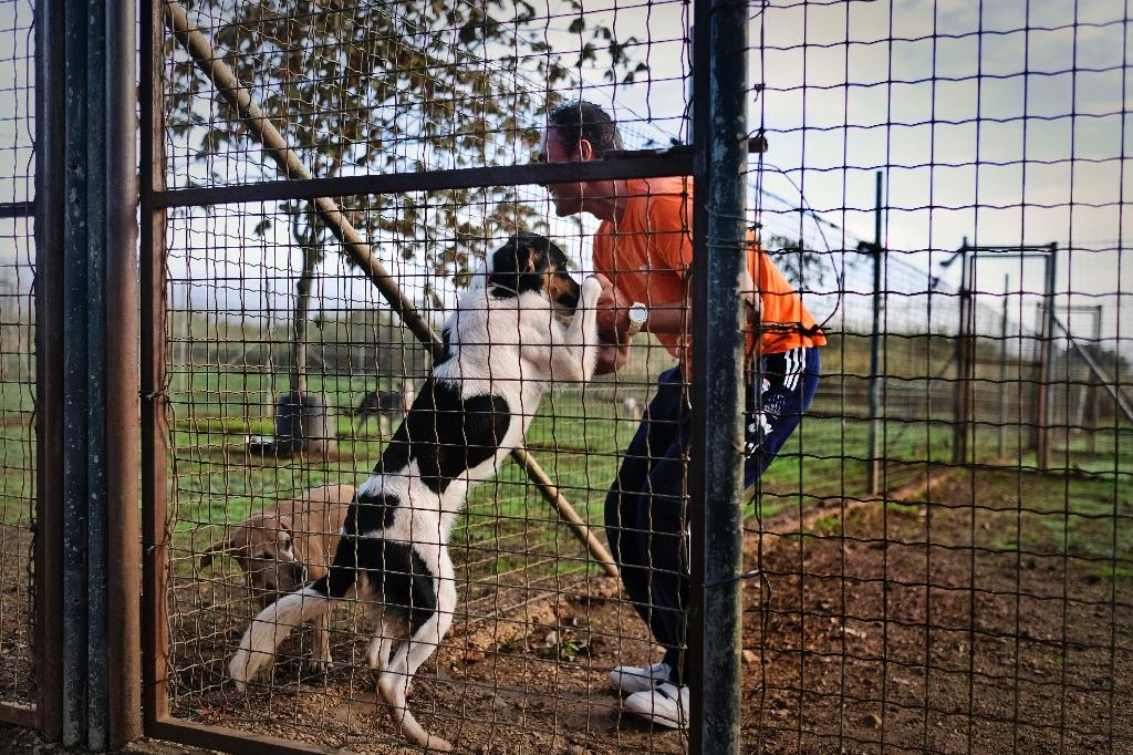 """A prisoner in the high security prison at Monsanto in Lisbon cuddles a dog at a kennel staffed by inmates, and dubbed the """"Dog's House"""" (AFP Photo/Patricia de Melo Moreira)"""