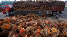 Refined palm oil cargoes stuck at Indian ports after import curbs - sources