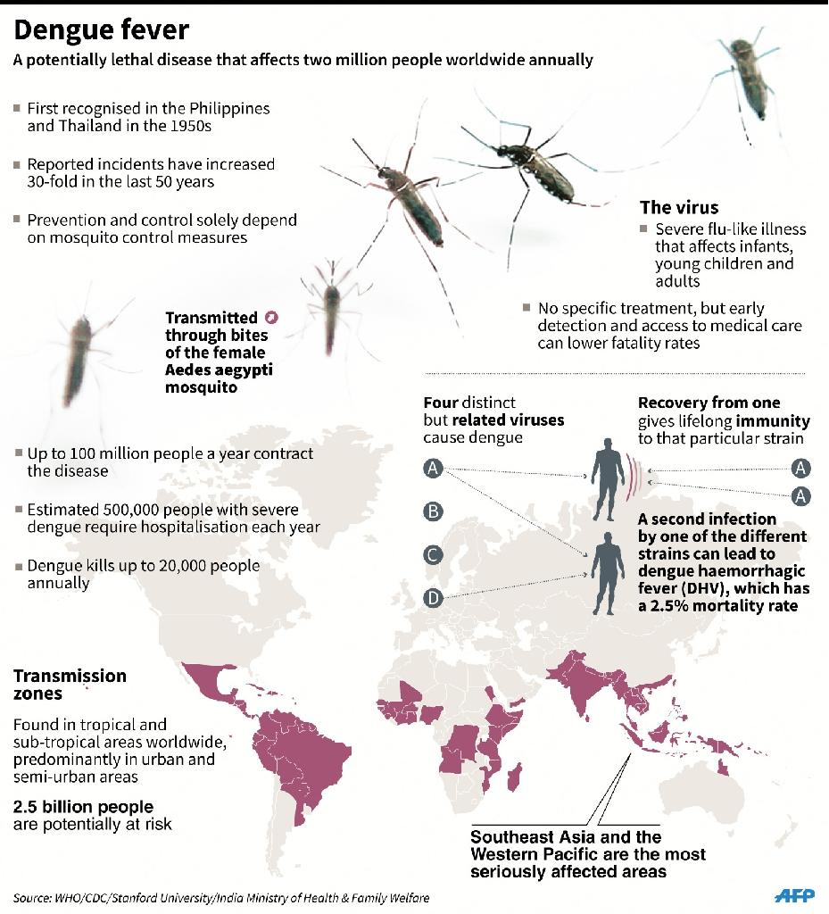 Graphic on dengue fever (AFP Photo/)