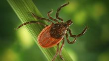 COVID-19 could lead to increase in tick-borne illness, experts say. Here's why