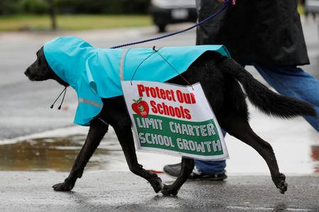 FILE PHOTO: A teacher gets help from his dog during the Los Angeles public school teachers' strike in Gardena