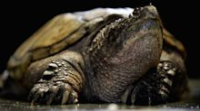 Science teacher allegedly fed a 'sick' puppy to class snapping turtle as students watched