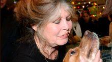 Brigitte Bardot, el mito erótico de los 60 que lo dejó todo para defender a los animales