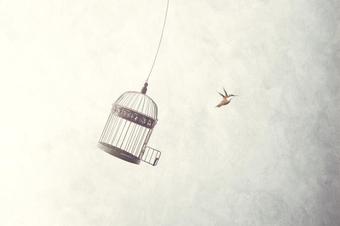 little birds escape out of birdcage