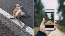Man urges Aussies to take on 'horrendous' task to reduce roadkill
