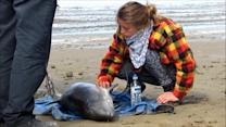Porpoise dies after rescue attempt on UK beach