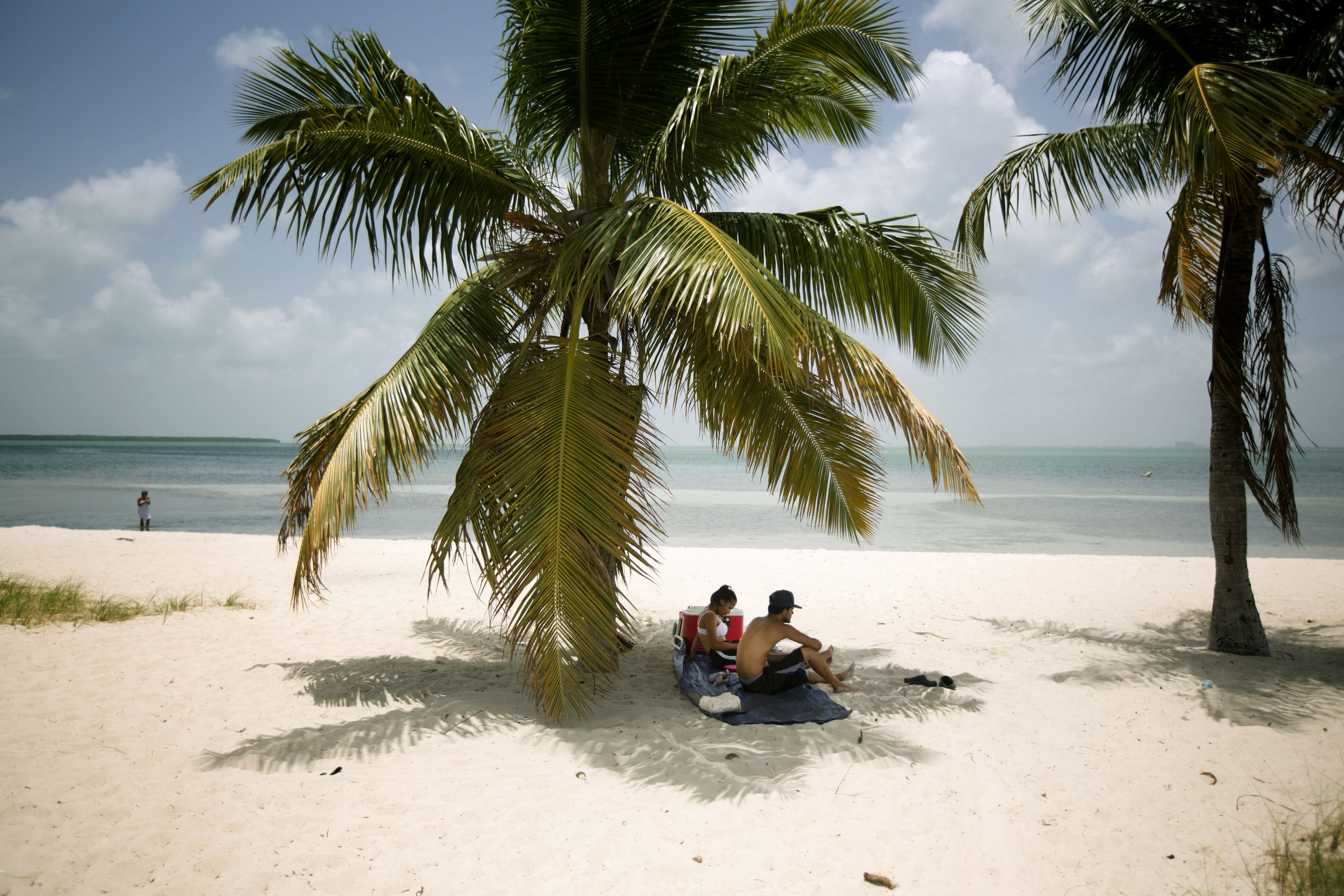 FILE - In this July 1, 2015 file photo, Marvin Hernandez, right, and Kelly Vera sit in the shade of a palm tree, in Key Biscayne, Fla. Florida's iconic palm trees are under attack from a fatal disease that turns them to dried crisps in months, with no chance for recovery once they become ill. Spread by a rice-sized, plant-hopping insect, lethal bronzing has gone from a small infestation on Florida's Gulf Coast to a nearly statewide problem in just over a decade. (AP Photo/J Pat Carter, File)