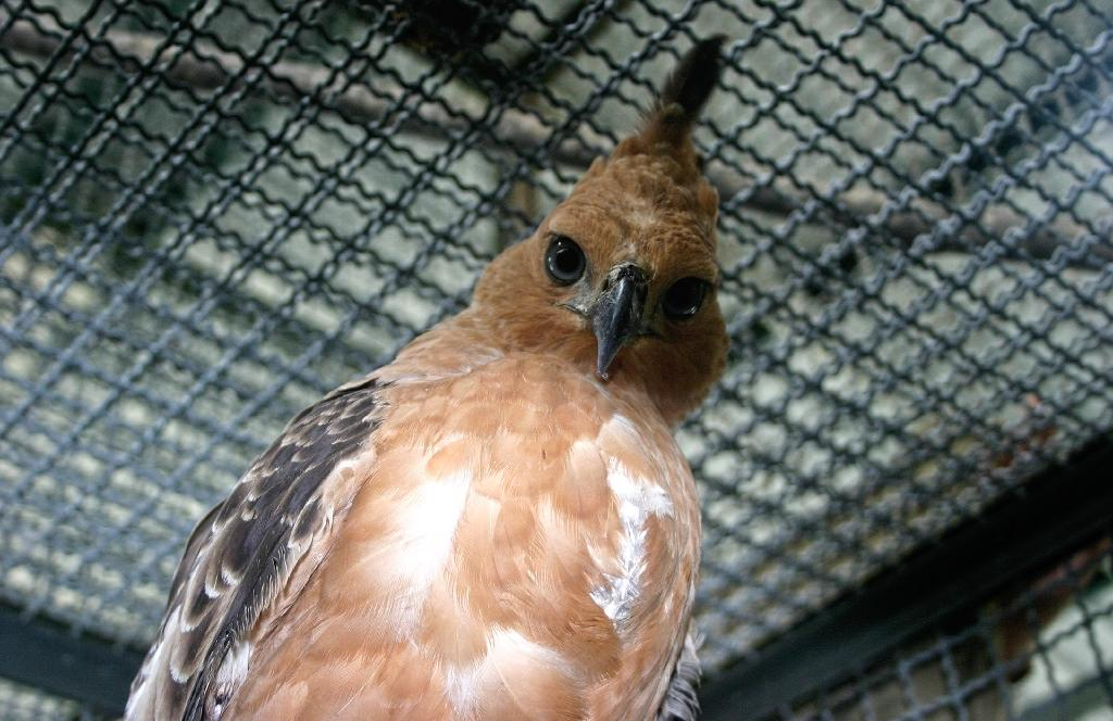 Indonesian birds face extinction due to pet trade: study
