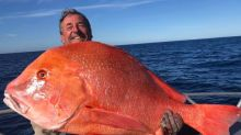 澳男釣起22公斤「極巨橘紅怪魚」!專家驚:上次是58年前