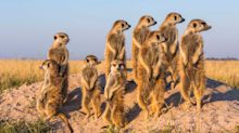South Africa's greatest wildlife holidays, from Big Five safaris to desert drives