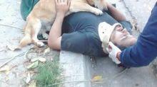 Homem sofre acidente e cão se recusa a sair do seu lado