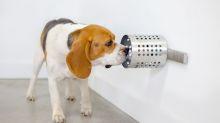 Los perros pueden oler el cáncer