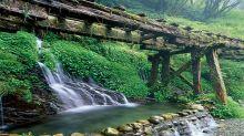 漫遊療癒山林步道!森林系五大微秘境
