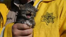 Amid all the devastation, a box of kittens was rescued from raging California wildfires
