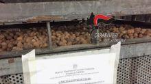 Blitz ad Afragola: 1500 chili di noci sequestrate
