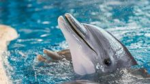 Virgin Holidays to open America's first dolphin sanctuary