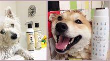 主子過得好,奴才就開心!這些護膚品牌都有為狗狗推出產品!