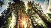 Is Redwood Trust a Buy?