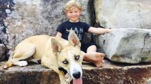 Kim Zolciak Shares Photo of Son Kash Fearlessly Cuddling Up to the Dog that Bit Him