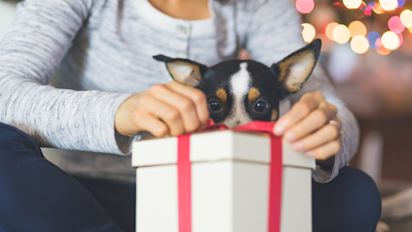 21 unique holiday gift ideas for pet lovers