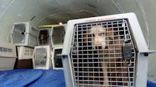 Transporting pets doesn't even make United that much money. Here's why they bother to do it.