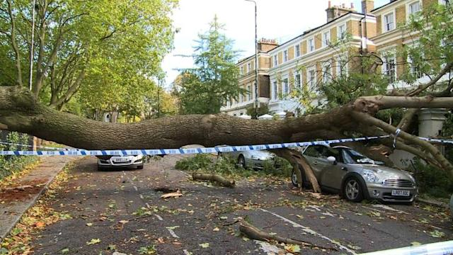 Trees litter London streets after storm