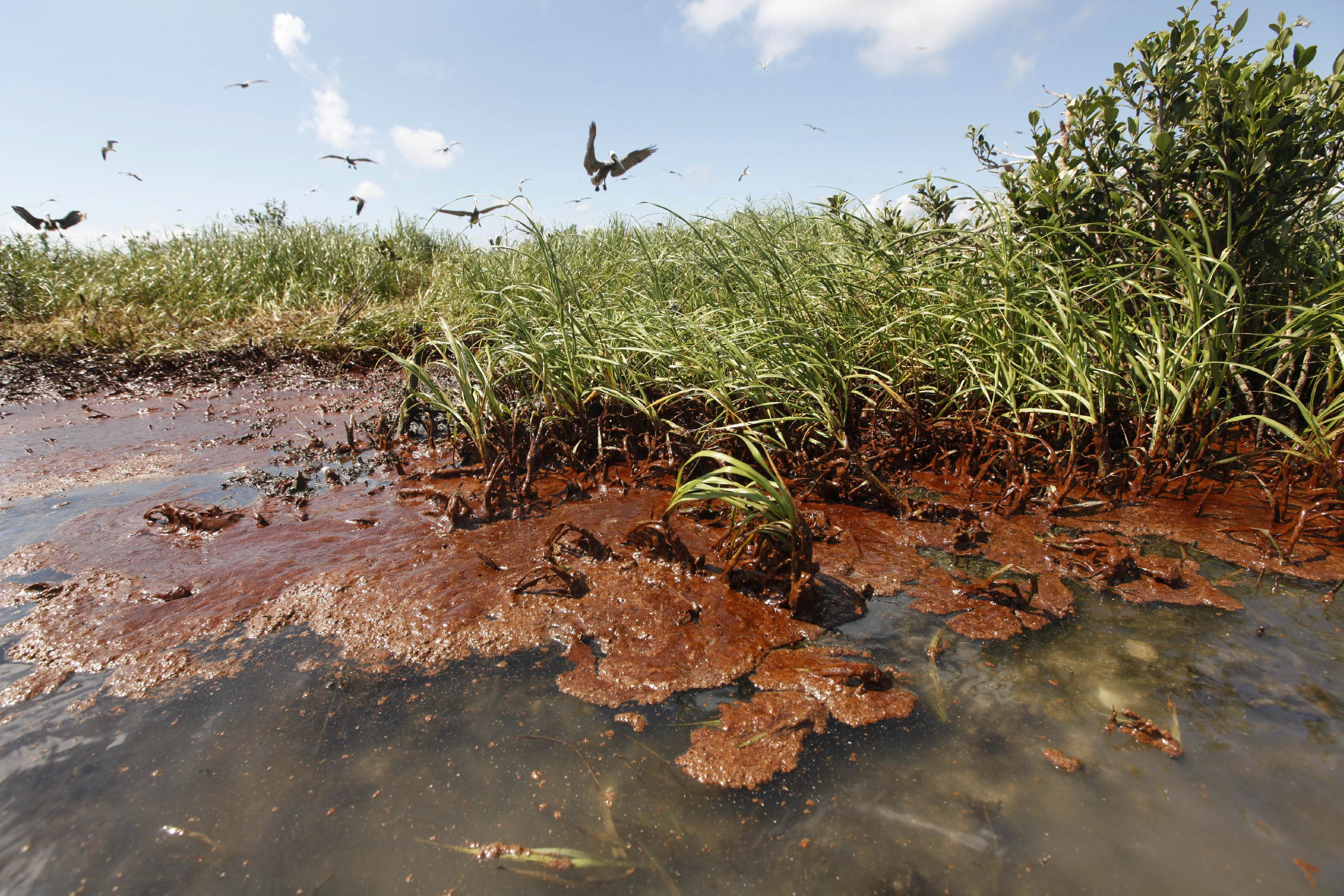 5 environmental consequences of oil spills thoughtco - HD3021×2014