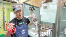 Homem realiza tosa gratuita em cães abandonados para ajudá-los a encontrar um lar