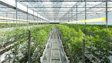 Why Innovative Industrial Properties, Hillenbrand, and Canopy Growth Slumped Today