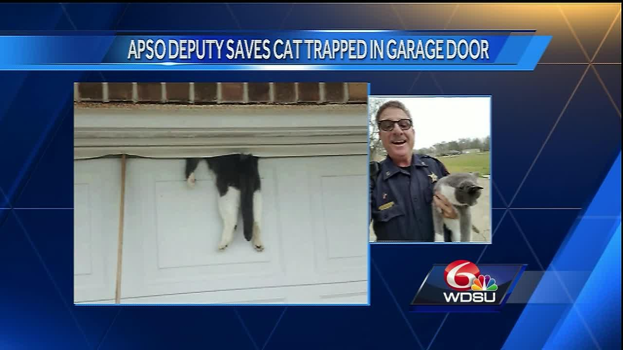 Icymi ascension parish kitty has one less life after for Garage ad orleans