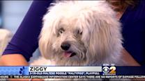 Furry Friend Finder: Ziggy And Ernie