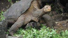 Body of tortoise 'Lonesome George' returned to Galapagos Islands