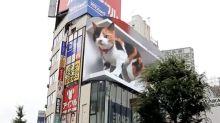 Giant cat appears on Shinjuku's 3D billboard
